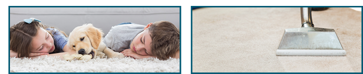 Reliable Carpet Steam Cleaning